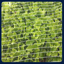 Agriculture& horticulture proofing net